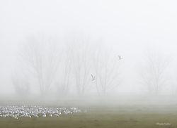 Gabler_-_Lifting_Fog_San_Joaquin_Valley_copy.jpg