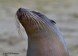 Galapagos-Sea-Lion-on-San-Cristobal-Island-PPW.jpg