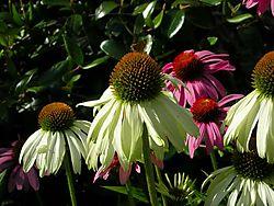 Garden2010_116.JPG