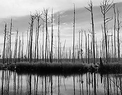 Ghost_Trees.jpg
