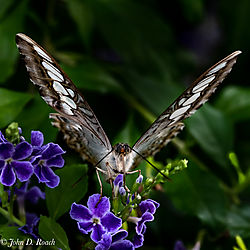 Ginter_Butterflies-14.jpg