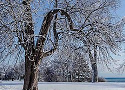 Gnarled_and_Venerable_Tree.jpg
