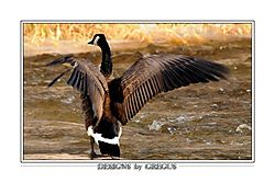 Goose_500mm_f8_84_crop_frame.jpg