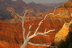 Grand_Canyon-1.jpg