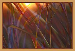 Grass2B.jpg