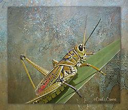 Grasshopper_Framed_Done.jpg