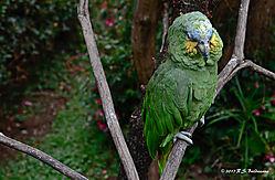 Green-Parrot-in-Quito-Ecuador-PPW.jpg