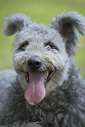 Grey_doggy-small.jpg
