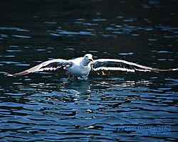 Gull_Takeoff.jpg