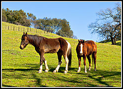 HORSES_EAST_OF_AMADOR_CITY_I_03-16-19_PS-F_.jpg