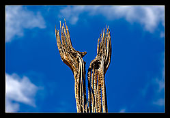 Hands-and-Sky-b.jpg