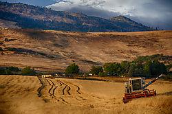 Harvest5.jpg