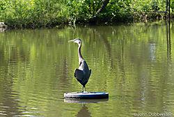 Heron_Tulsa_Zoo.jpg