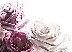 HighKey_Roses-4-1.jpg
