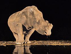 Hippo_in_the_Light.jpg