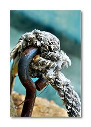 Hook-Rope-800_2176.JPG