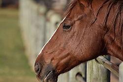 Horse_1_copy.jpg