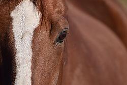 Horse_4_copy.jpg