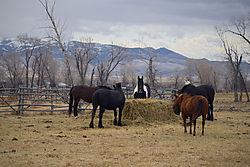 Horses_Feeding_edited-1.jpg