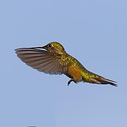 Hummingbird-360.jpg