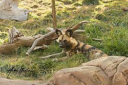 Hyenna_Denver_Zoo_10102020.jpg