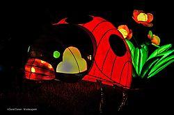 Illuminasia_Lady_Bug.jpg