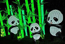 Illuminasia_Pandas1.jpg