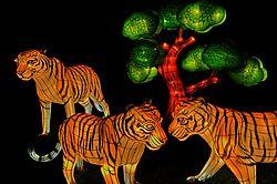 Illuminasia_Tigers.jpg