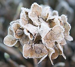In_the_winter_smaller_file_.jpg