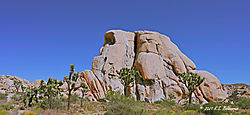 Intersection-Rock-in-Joshua-Tree-National-Park-PPW.jpg