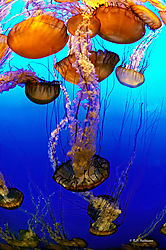 Jelly-Jamboree.jpg