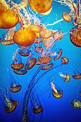 Jelly_Fish_for_MPIX.jpg