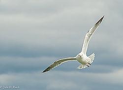 John_D_Roach--Lake_Gull_2.jpg