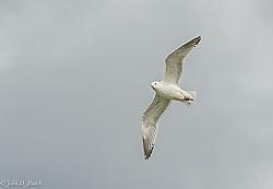 John_D_Roach--Lake_Gull_3.jpg