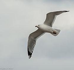 John_D_Roach--Lake_Gull_5.jpg