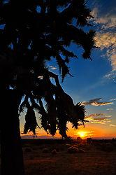 Joshua_Tree_Sun.jpg