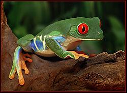 Jungle-Colors-2.jpg