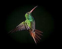 Just_Bird.jpg