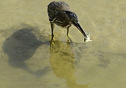 KL06_Bird_Fish.jpg