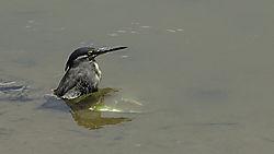 KL07_Bird_Bath_After_Lunch.jpg