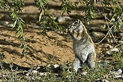Kalahari_09_069.jpg