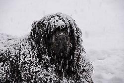 Kuma_snow.jpg