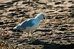 Lake_Ontario_seagull_morning_light_1_of_1_.jpg