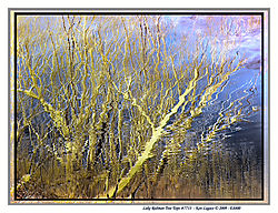 Lake_Redman_TreeTops_7713.jpg