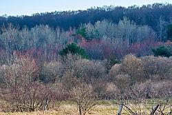 Landscape_Contest_12-7_05.jpg