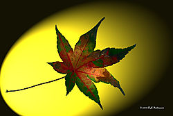 Leaf-Study-in-Red-and-Green-PPW.jpg