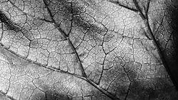 Leaf_11.jpg