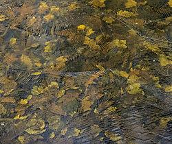 Leaf_Abstract_1200.jpg