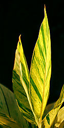 Leaf_DSC_2567_PJ1.jpg