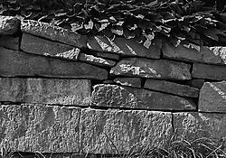 Leaves_Stones_BW_B_2477.jpg